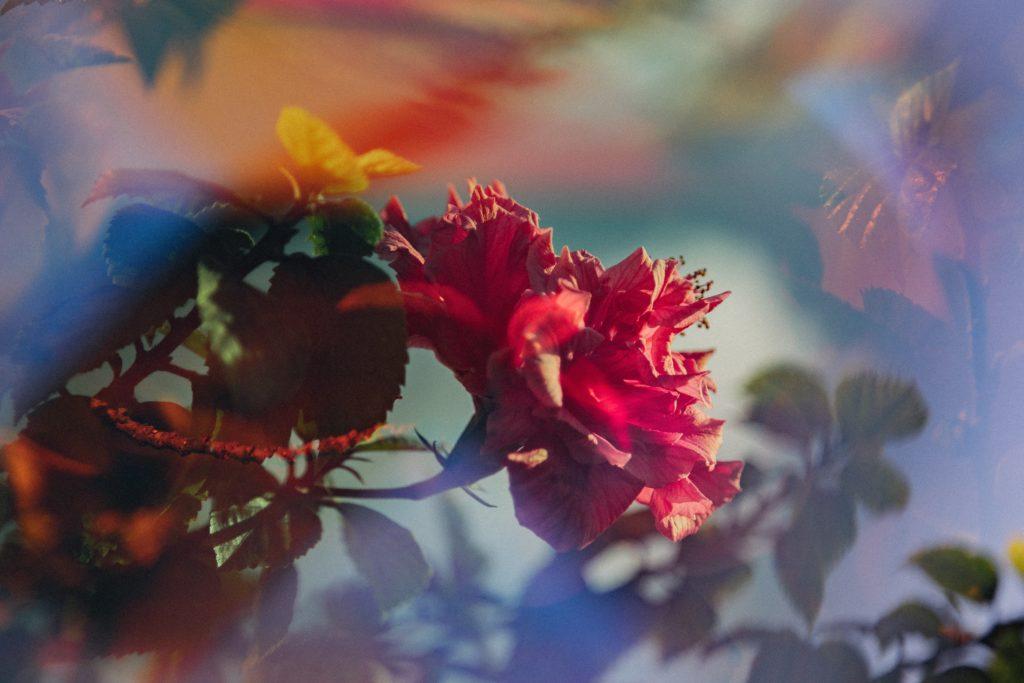 flower obscured by lens burst